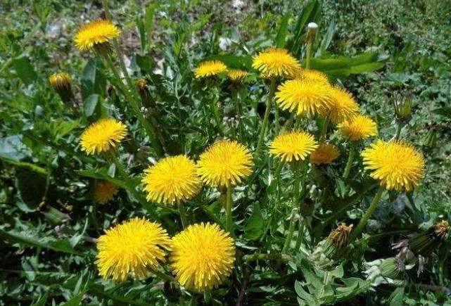 春天是治疗前列腺疾病的黄金季节